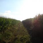Ab durch die Felder