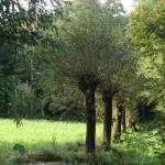 Niederrheinklischee