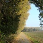 Goldener Herbst in Rommerskirchen