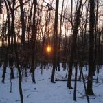 Licht am Ende des Stadtwaldes