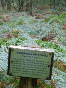 Jaja. Der Faulbaum.