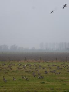 Niederrheinische Wintergäste