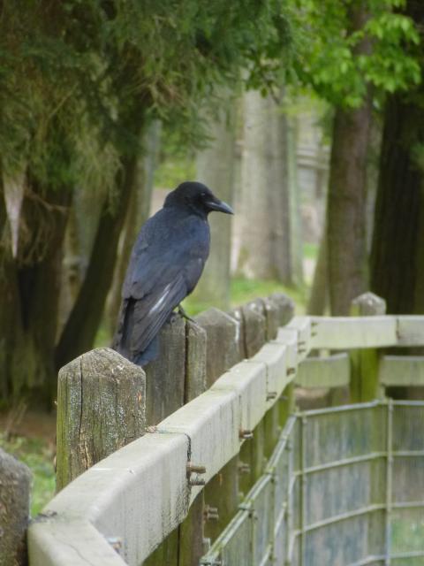 Ein Wachvogel