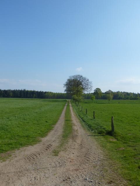 Niederrhein oder schon Müsterland