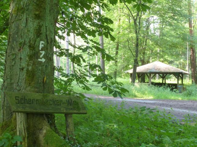Schutzhütte im Dämmerwald