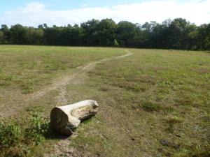 Niederländische Heidelandschaft