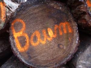 Für Anfänger im Wald