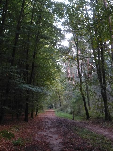 Im Wald und doch entlang der A52