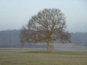 Fotografen mögen solche Bäume