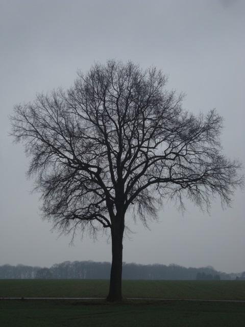 Ein Regenbaum
