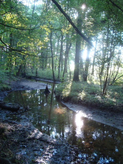 Wasser, Wald und Sonne