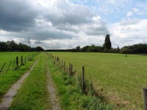 Einsam durch die Felder