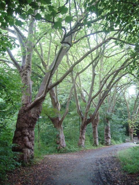 Bäume wie bei Dr. Snuggles