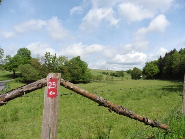 Der Waldmythenweg