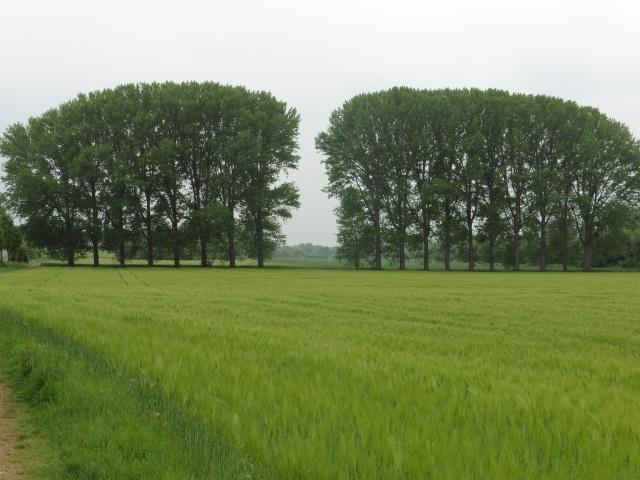 Felder und Bäume in Friesheim
