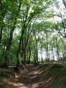 Im Wald hinter der Molzmühle