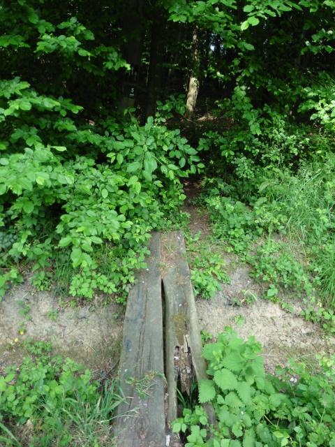 Im Wald bei Bönen