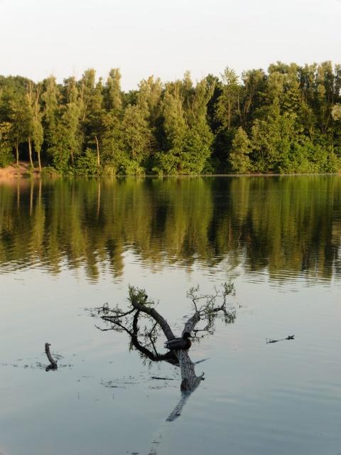 Blick auf den Menzelsee