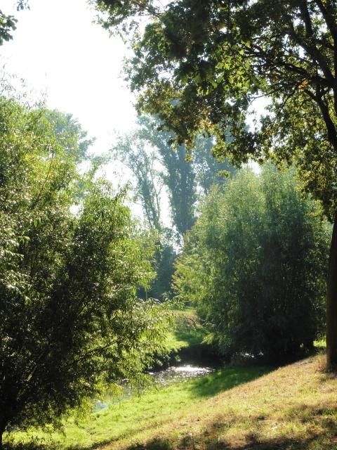 Dschungel am Residenzweg