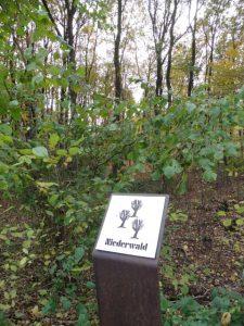 Im Niederwald der Bockerter Heide