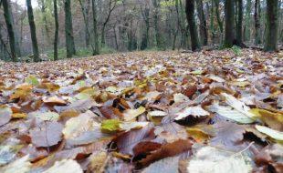 Herbst im Forst Benrath