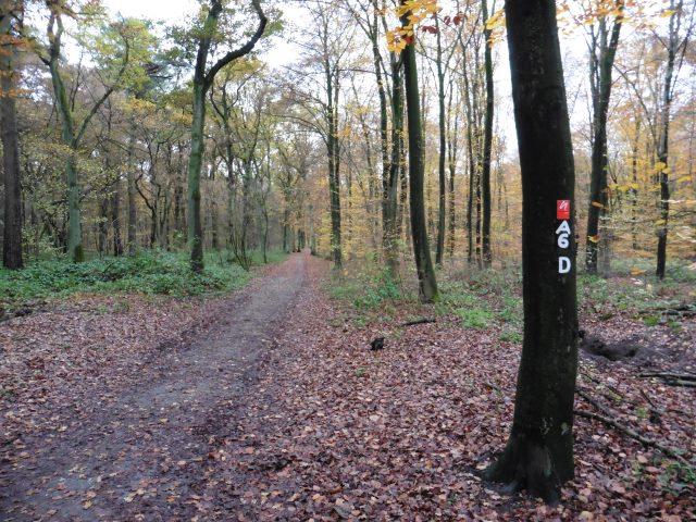 In guter Gesellschaft durch den Düsseldorfer Stadtwald