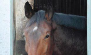 Pferd in Werden