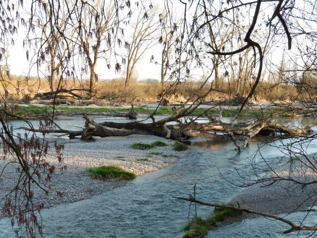Die Isar bei Moosburg
