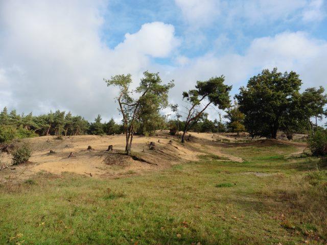 Heidelandschaft in der Schandelose Heide bei Velden
