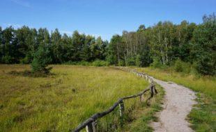 Das Venner Moor ist ein ehemaliges Hochmoor