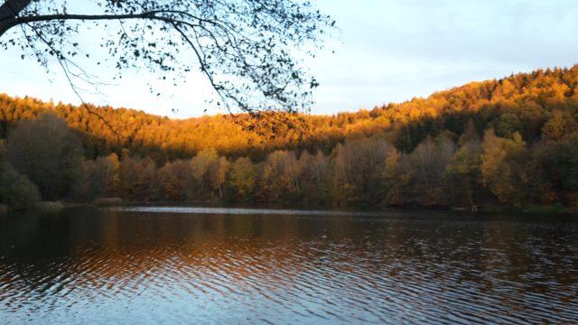 Golden Brown am Freilinger See in der Eifel bei Blankenheim