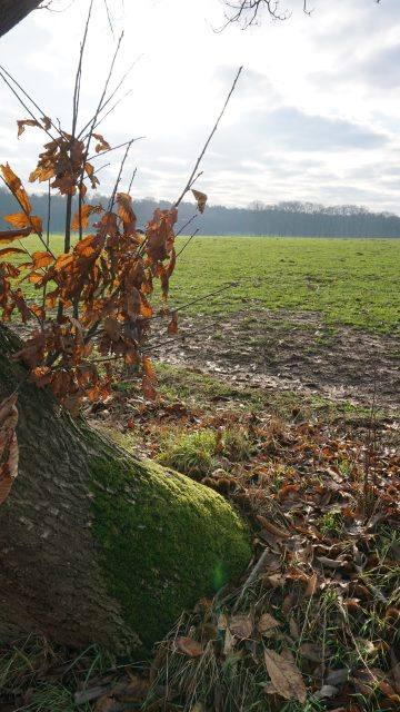 Ausblicke im Westmünsterland bei Rhade
