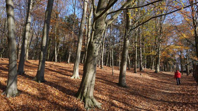 Herbst am Hülser Berg