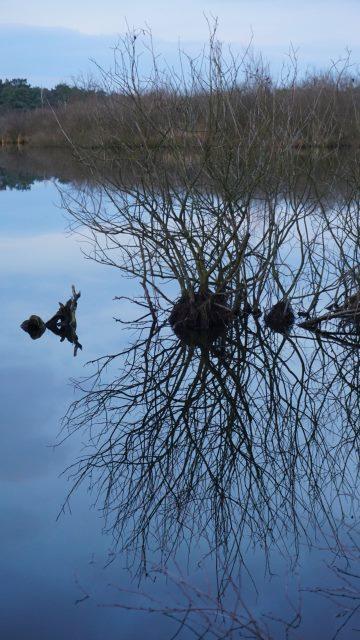 Im Eendenmeer
