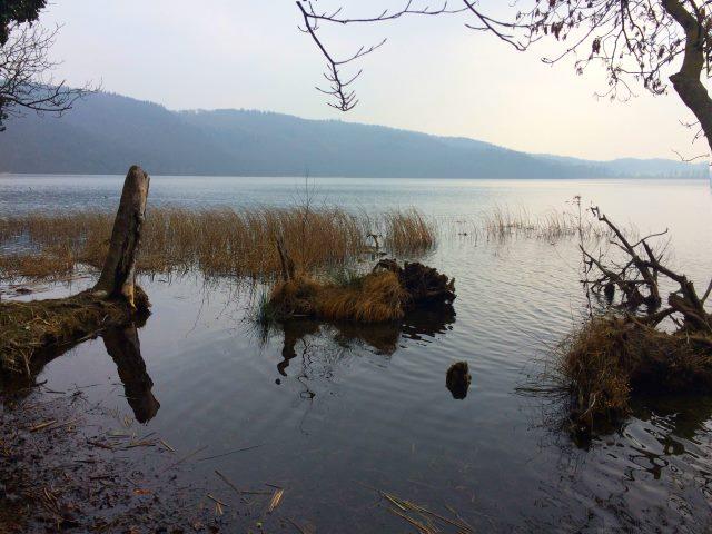Blick auf die Caldera - dem Laacher See