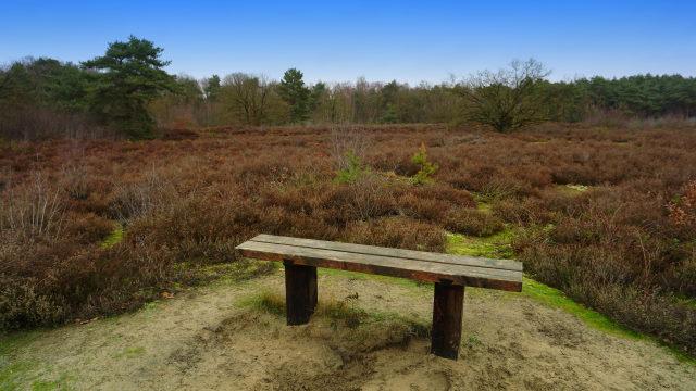 Die Peelse Heide