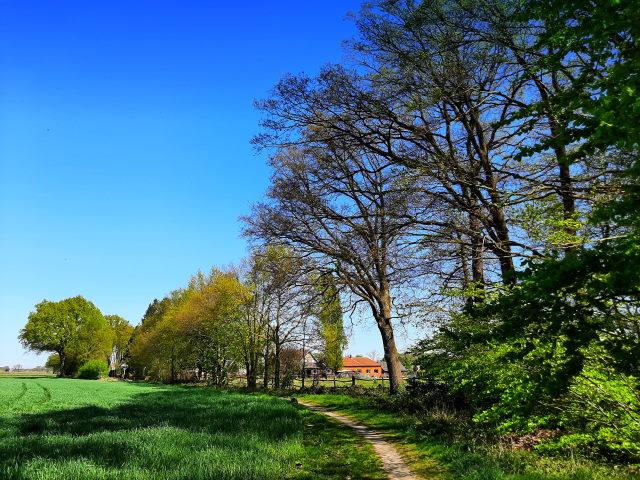 Münsterlandschaft