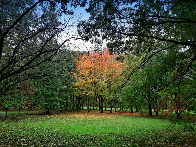 Im Gehölzgarten Ripshorst