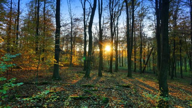 Im Kothener Wald