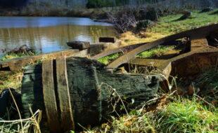 Fundstück am Mühlenteich