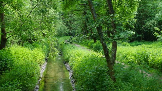 Die grüne Hölle am Beeckbach