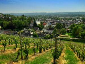 In den Weinbergen von Oberdollendorf