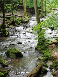Holzbachschlucht im Westerwald
