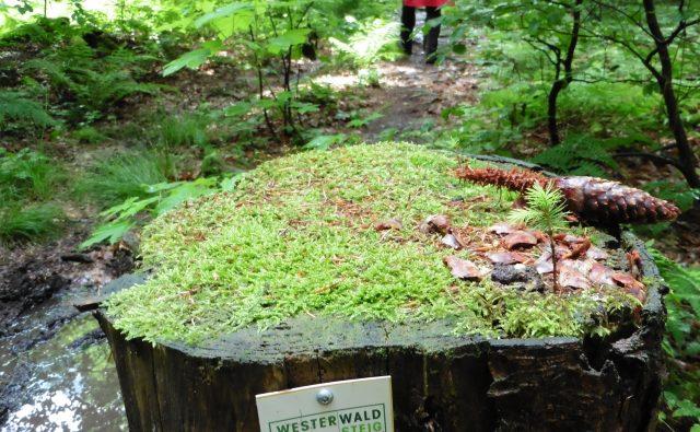 #Bloggerwandern im Westerwald 2016
