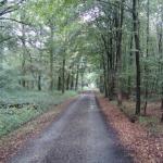 Der A12 durch den Vluynbusch