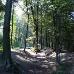 Im Forstwald