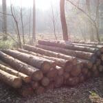 Gute Holzpreise