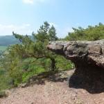 Blick über Stock und Stein