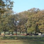 Pferde am Wanderweg