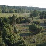 Heidelandschaft vom Aussichtsturm